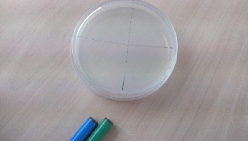 practica bacterias