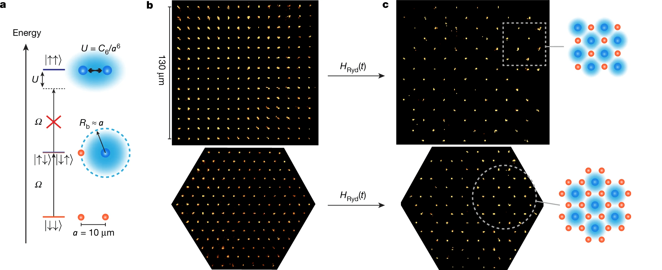 Emergence of antiferromagnetic ordering from the Rydberg blockade in square and triangular arrays